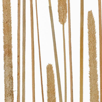 Lumicor - Natural - Cattail