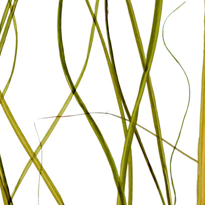 Lumicor - Natural - Prairie Grass