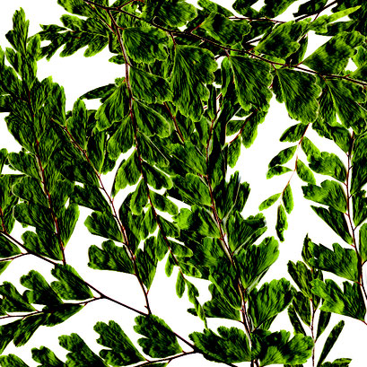 Lumicor - Natural - Woodland Digital Print