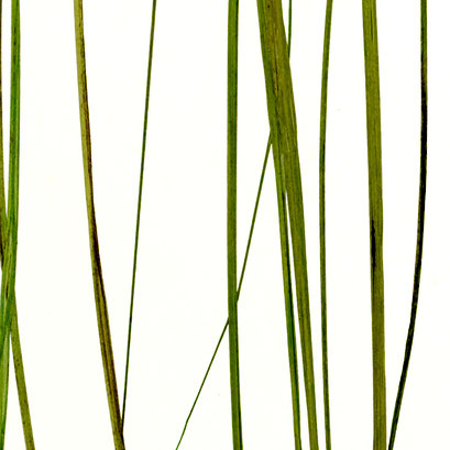 Lumicor - Natural - Coastal Grass Light
