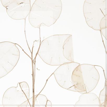 Silver Leaf FE