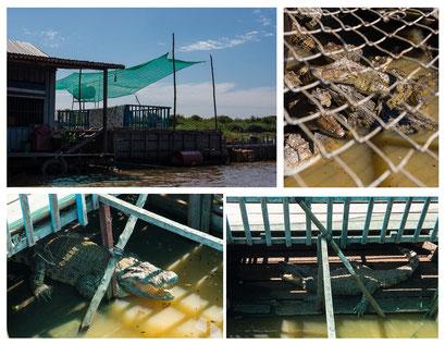 Tonle Sap See: schwimmende Dörfer/Krokodilfarm :-(