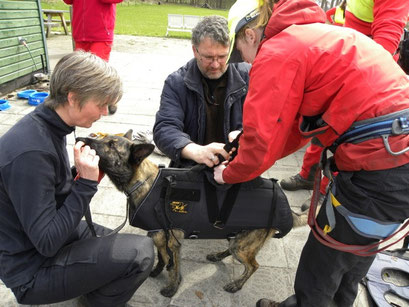 entrainement chien de sauvetage