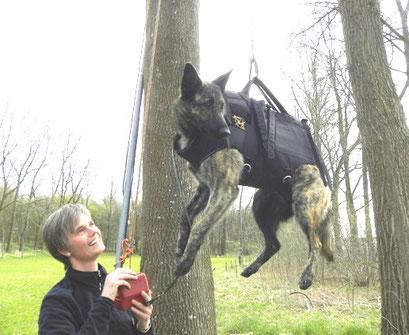 entrainement chien de sauvetage.. Sienna reste dans chaque circumstance cool..