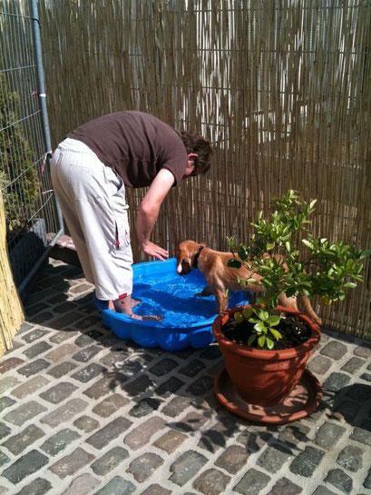 Hundepool im Garten