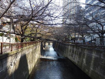 目黒川(別所橋)
