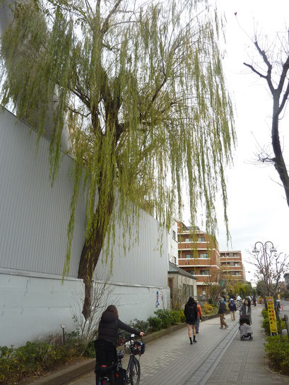 壁から樹が生えている?