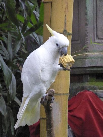 Bild: Vogel im Park des Museums Don Antonio Blanco