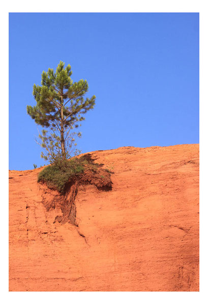 28-L'arbre