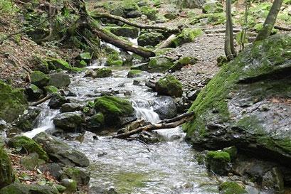 石や木の根っこがゴロゴロの岩場