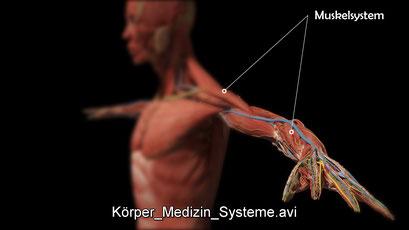 3D-Visualisierung Medizin innere Medizin