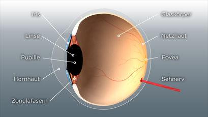 3D-Visualisierung Medizin Augenmedizin