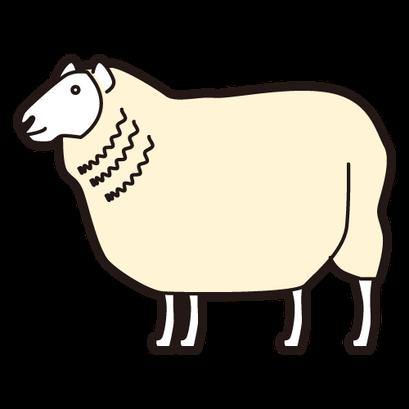 #sheep #羊