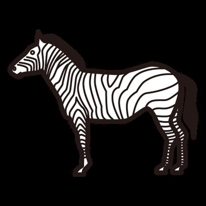 #zebra #シマウマ