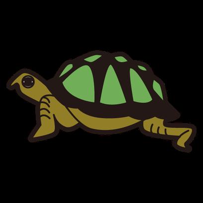 #turtle #亀