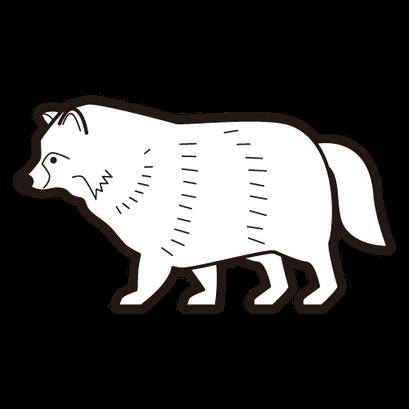 #raccoon dog #狸