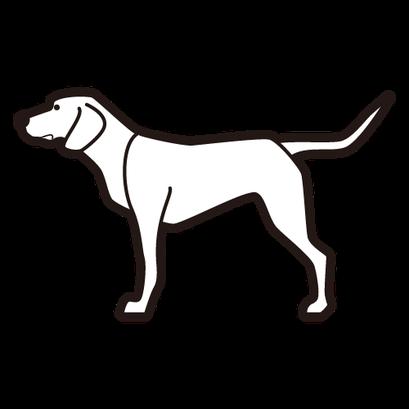 #dog #犬