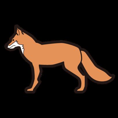 #fox #狐