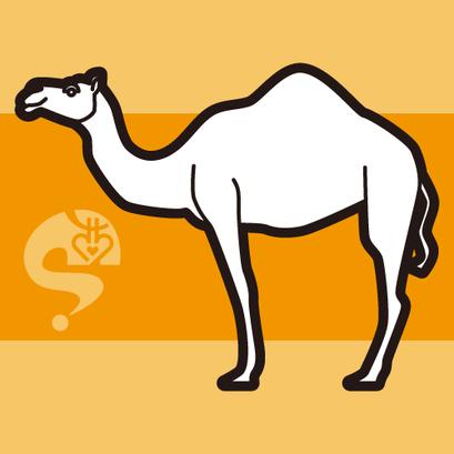 #camel #ラクダ