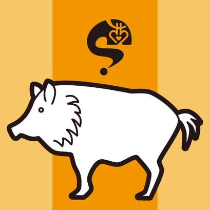 #boar #猪