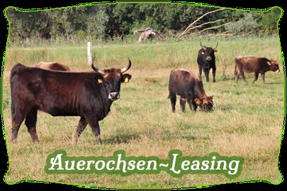 Auerochsen-Leasing