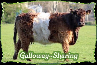 Galloway-Sharing