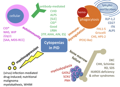 Autoimmune and other cytopenias in primary immunodeficiencies: pathomechanisms, novel differential diagnoses, and treatment