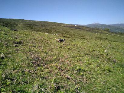 Entrenando con Macmax de Monte Tejas