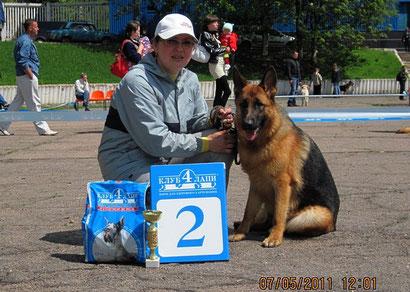 дрессировка собак в донецке хэндлинг щенки немецкой овчарки