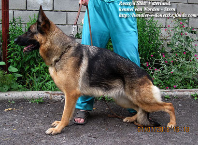 немецкая овчарка собаки донецк щенки продажа купить щенка немецкой овчарки донецк