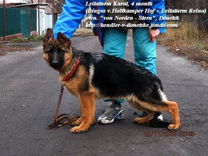 щенки немецкая овчарка купить щенка в донецке
