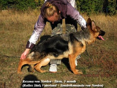 купить щенка немецкой овчарки в донецке питомник немецких овчарок фон нордэн штэрн громова оксана