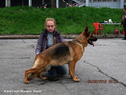 щенки немецкой овчарки купить в донецке украина дрессировка собак хэндлинг