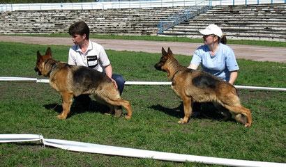 щенки немецкой овчарки купить в донецке хэндлинг дрессировка