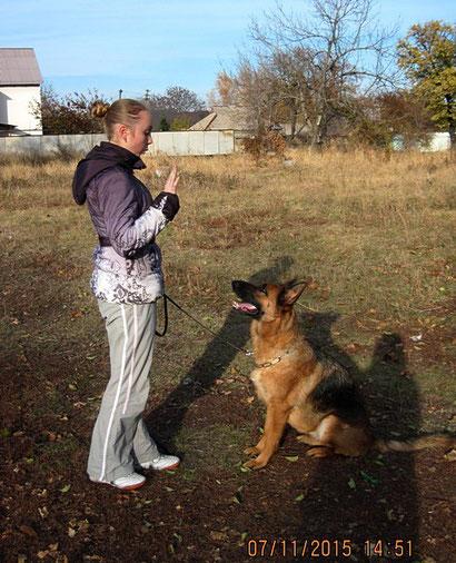 дрессировка собак в донецке хэндлинг