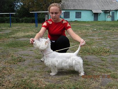 дрессировка собак в донецке продажа щенков немецкой овчарки хэндлинг