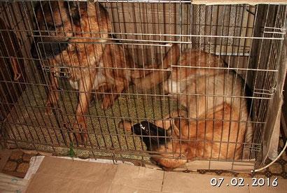 В клетке Рексона спит так же )))