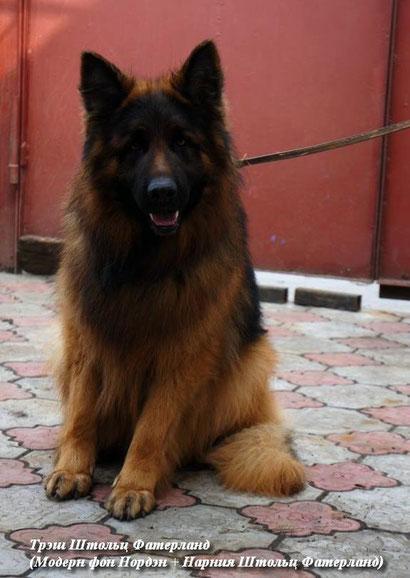 купить щенка немецкой овчарки дрессировка собак хэндлинг донецк