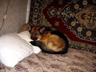 Валерия фон Нордэн, рожденная для дивана )))