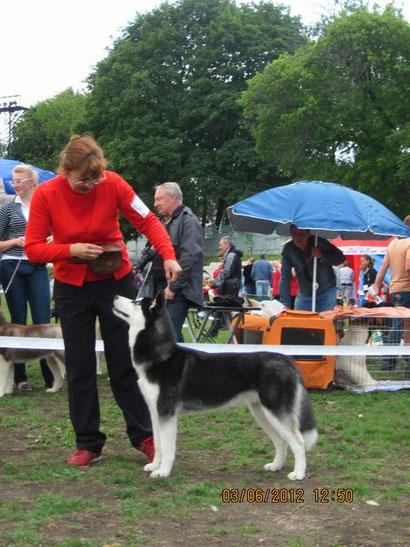 хэндлинг в донецке дрессировка собак щенки немецкой овчарки