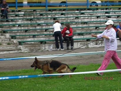 купить щенка немецкой овчарки в донецке хэндлинг дрессировка