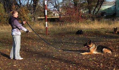 дрессировка собак в донецке