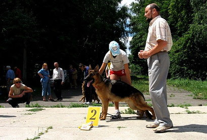 щенки немецкой овчарки продажа купить в донецке дрессировка хэндлинг