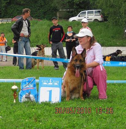щенки немецкой овчарки дрессировка хэндлинг