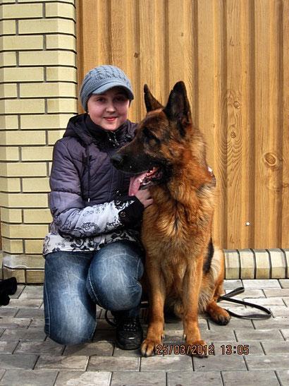 дрессировка собак донецк продажа щенков немецкой овчарки подготовка к выставкам