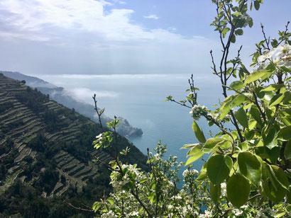 die terrassierten Weinberge bei Volastra
