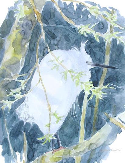 Aigrette garzette Egretta garzetta aquarelle Jean Chevallier