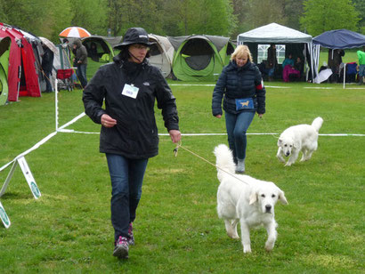 Golden Retriever Ausstellung in Friedberg