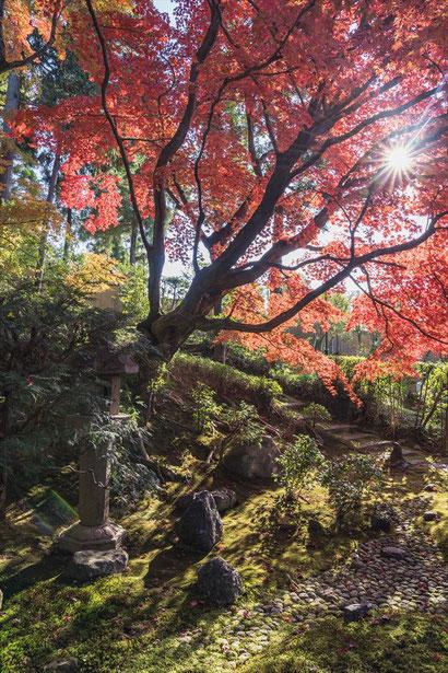 栄摂院の紅葉と苔の庭