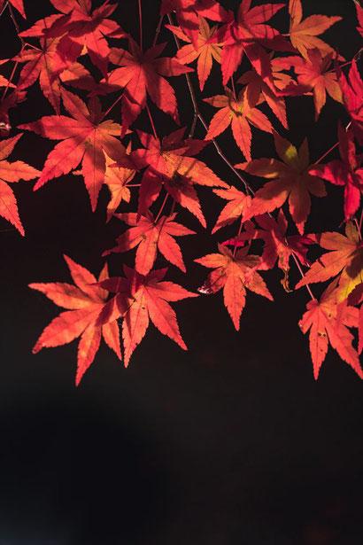 宝厳院のもみじの葉